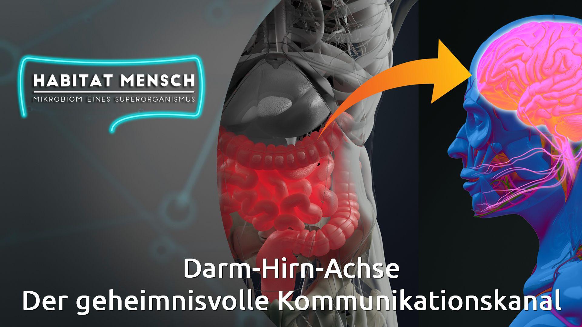 Darm-Hirn-Achse: Der geheimnisvolle Kommunikationskanal