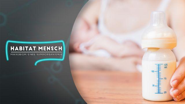 Stillen: Muttermilch wirkt positiv auf Darmmikrobiom