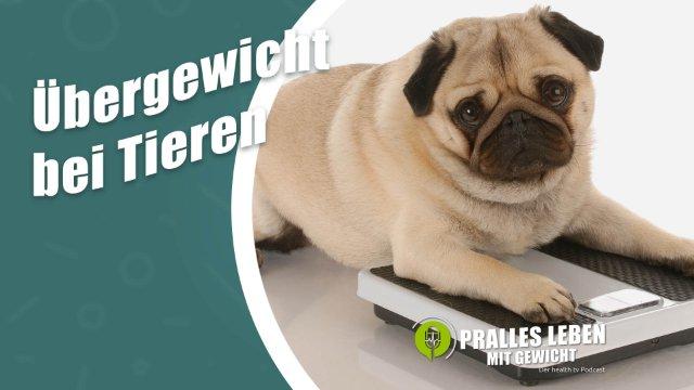 Übergewicht bei Haustieren: wie der Mensch, so der Hund?