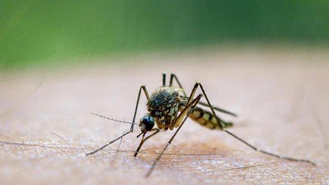 Was uns bei Mückenstichen wirklich hilft