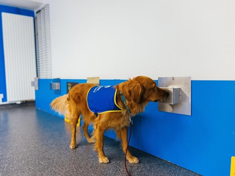 Hund spürt in Frankreich Corona-Infizierte auf