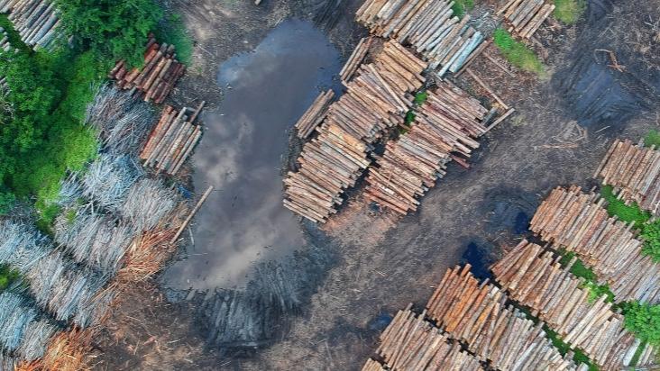 Eilantrag gegen Tesla-Wald-Rodung-Image