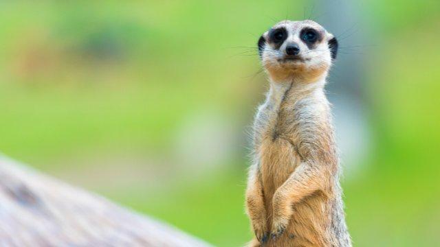 Hilfe für Tierparks & Wildgehege-Image