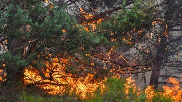 Lieberoser Heide brannte-Image