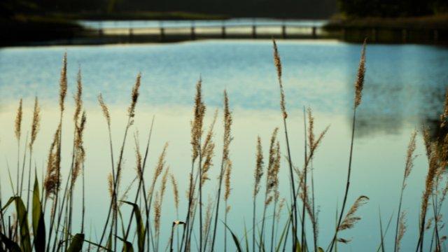 Wenn das Wasser verschwindet...-Image