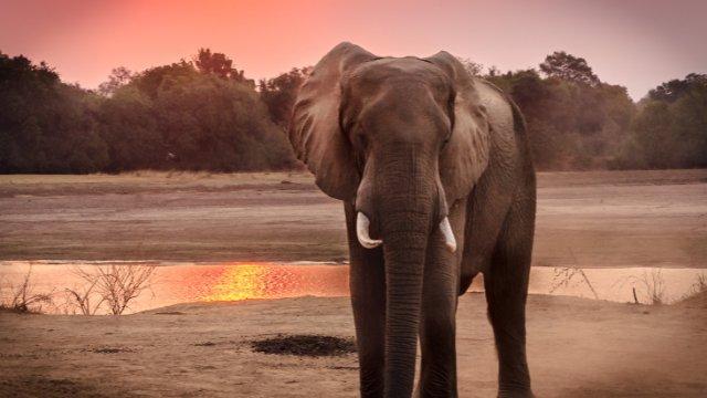 Neuer Elefant für Cottbus!-Image