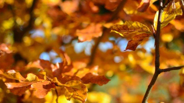 Die Cottbuser HerbstMesse findet statt-Image