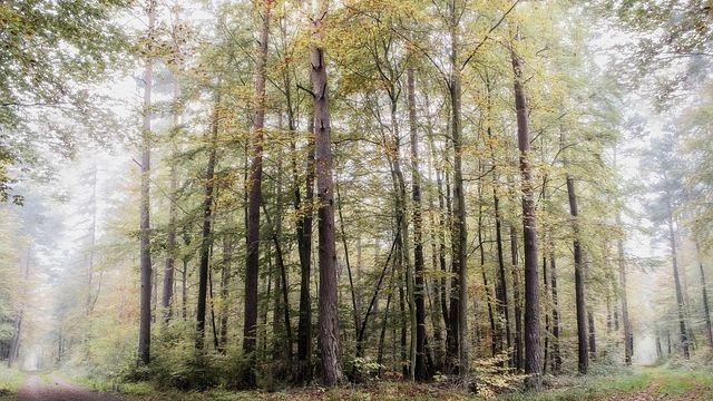 Beginn der Waldzustandserhebung in Rheinland-Pfalz-Image