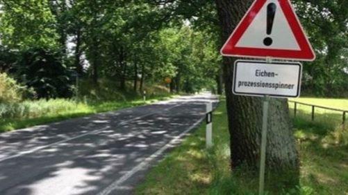 Eichenprozessionsspinner in Niedermohr entdeckt-Image
