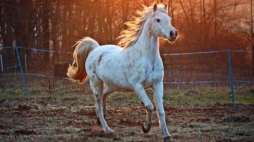 Hütschenhausen: Pferd vermisst-Image