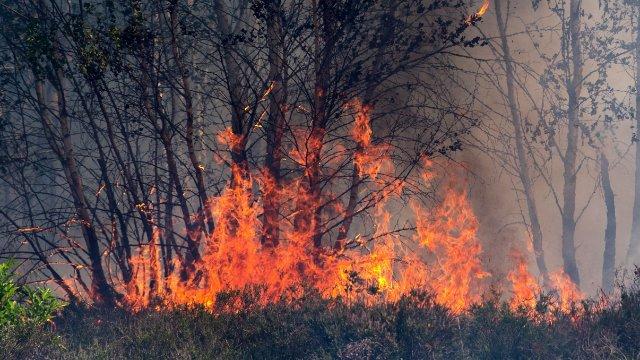 Forstamt warnt vor Waldbrandgefahr-Image