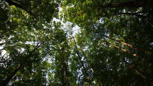 Förster der Wald- und Forschungsanstalt untersuchen Gesundheitszustand der Bäume im Pfälzer Wald-Image